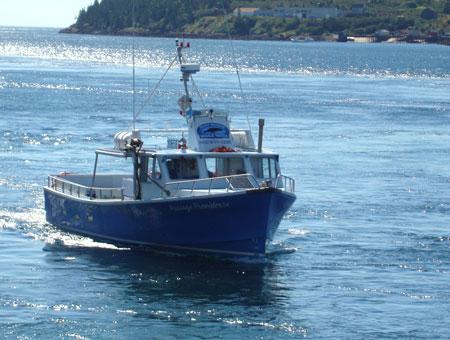 Bootstour zur Walbeobachtung am Tag nach dem Wettkampf