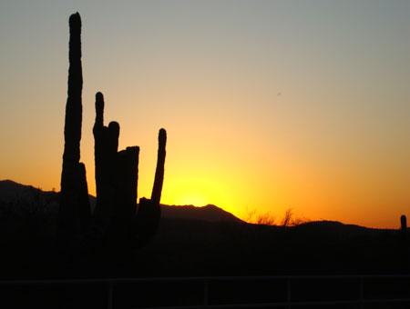 Kakteen im Sonnenuntergang